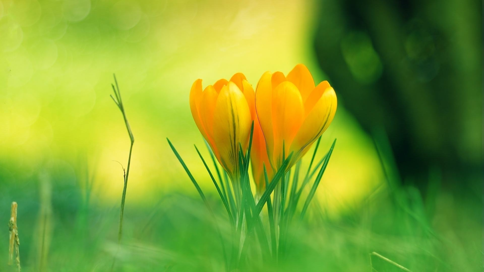 Wallpaper-flowers-baby-yellow-flower-wallpapers-images-617947