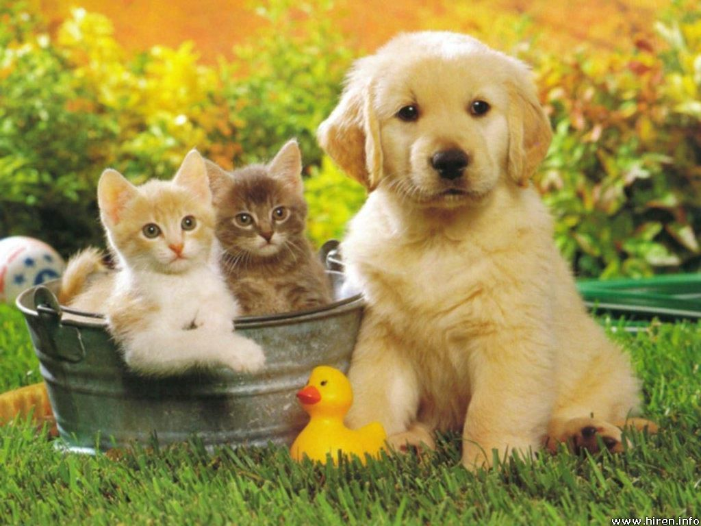 lovely-babies-babies-pets-and-animals---